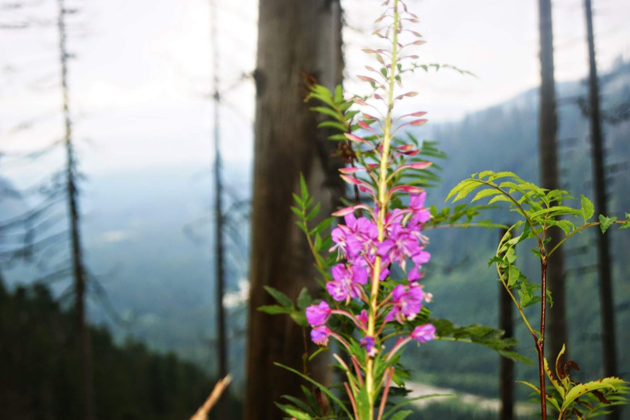 Kwiaty, symbolika kwiatów na pogrzebie